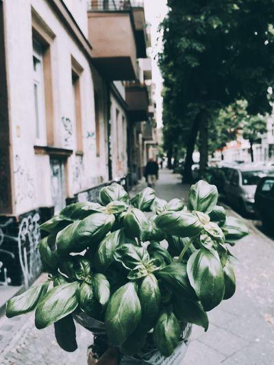 🌱🌱🌱🌱 Neukölln Auf Dem Weg Nach Hause