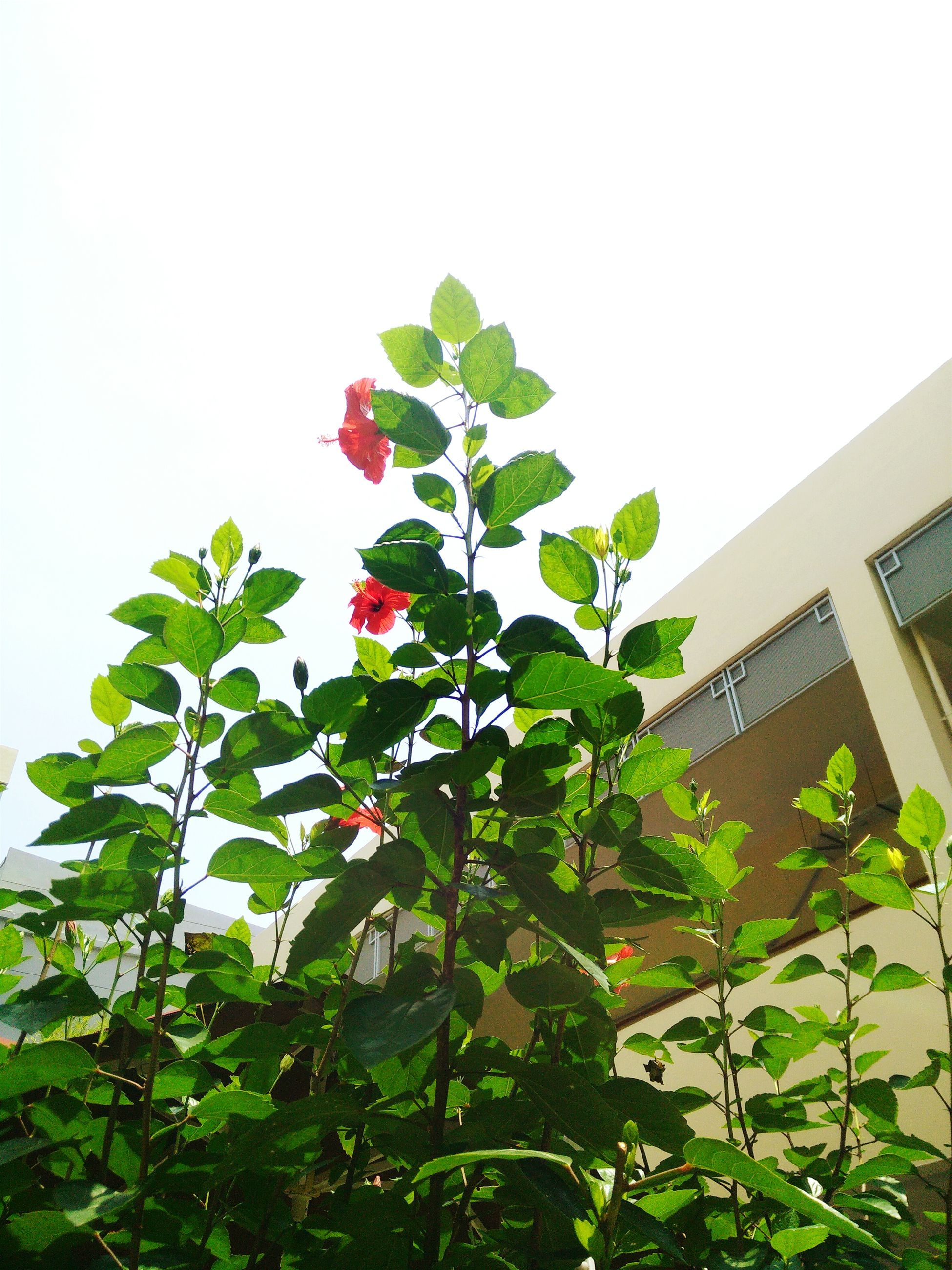 low angle view, growth, clear sky, leaf, architecture, built structure, building exterior, tree, green color, plant, nature, copy space, flower, freshness, branch, day, outdoors, no people, beauty in nature, growing