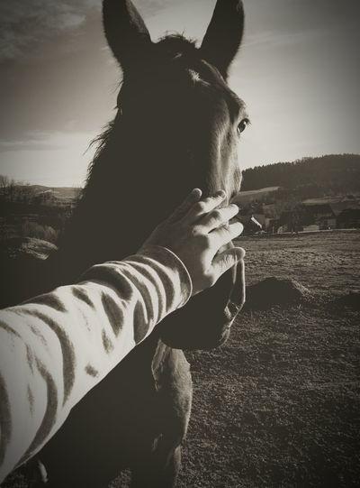 Horsein the Backyard