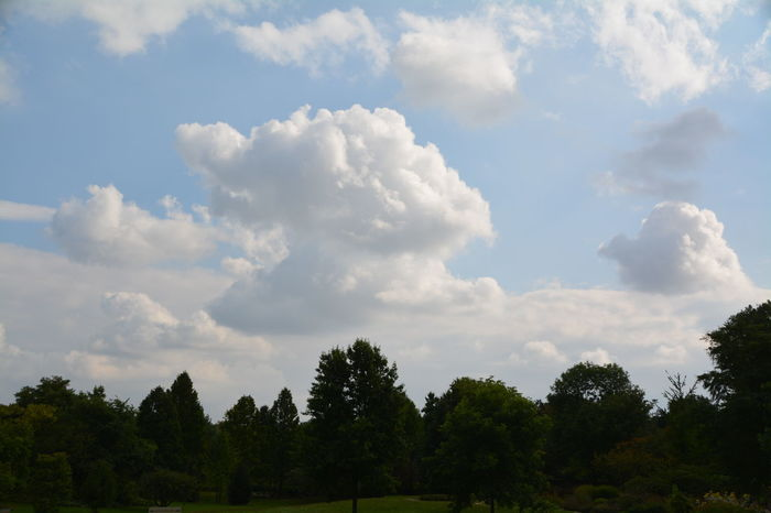 Beauty In Nature Blue Cloud Cloud - Sky Cloudscape Cumulus Cloud Day Green Green Color Growth Lush Foliage Majestic Nature Non-urban Scene Outdoors Remote Scenics Sky Solitude Tourism Tranquil Scene Tranquility Tree Treetop WoodLand