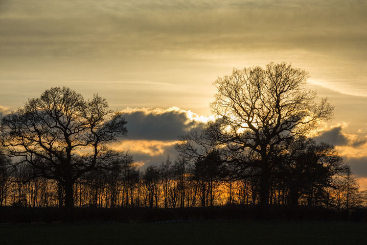 Silhouette bare trees on field against sky at sunset