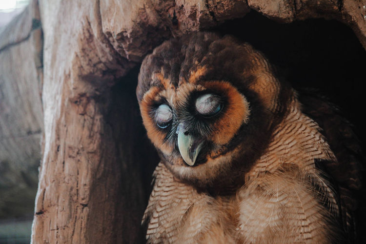 Close-up of owl in tree hollow