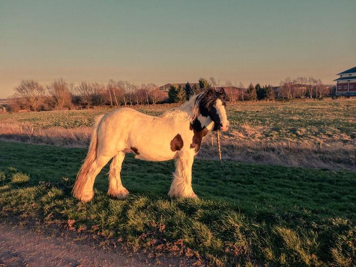 Pony standing on field