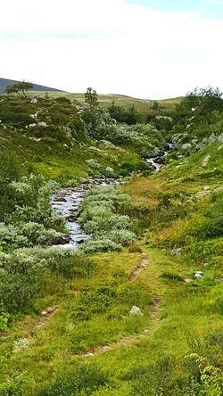 Dalarna Eeyem Photography Summer Enjoying Life Relaxing Nature Photography Landscape Grövelsjön Naturephotography Nature Naturelovers Water