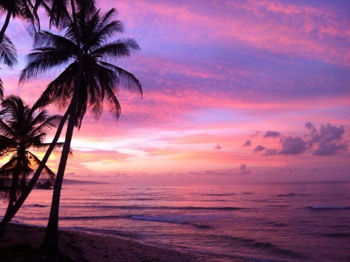 Sunset Paradise Palm Trees Beach Beautiful Pink TreePorn IPhone5 IPhoneography Neighborhood Martins Bay Beach Photography Beach Life Neighborhood Map