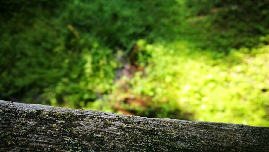 Nature Outdoors Forest Tree Trunk Focus On Foreground No People Beauty In Nature Day Tree Close-up Przyroda Life Litwa Lietuva Lithuania Flora Grass Beauty In Nature Green Color River