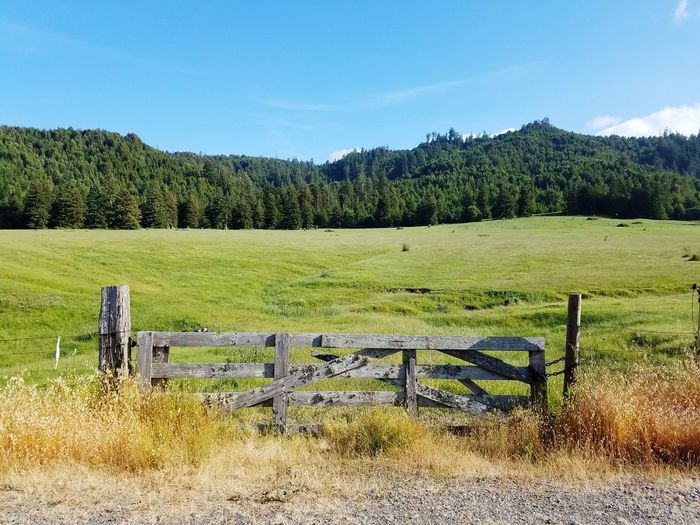 Agriculture Field Nature Old Wood Gate Old Wood Fence The Field Meadow The Meadow Mountain Field