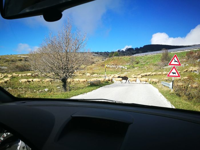 The Drive Car Car Interior No People Cloud - Sky Sheeps Outdoors Day Beauty In Nature