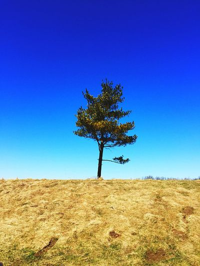One Lonely Tree