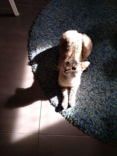 Cats Shadows &