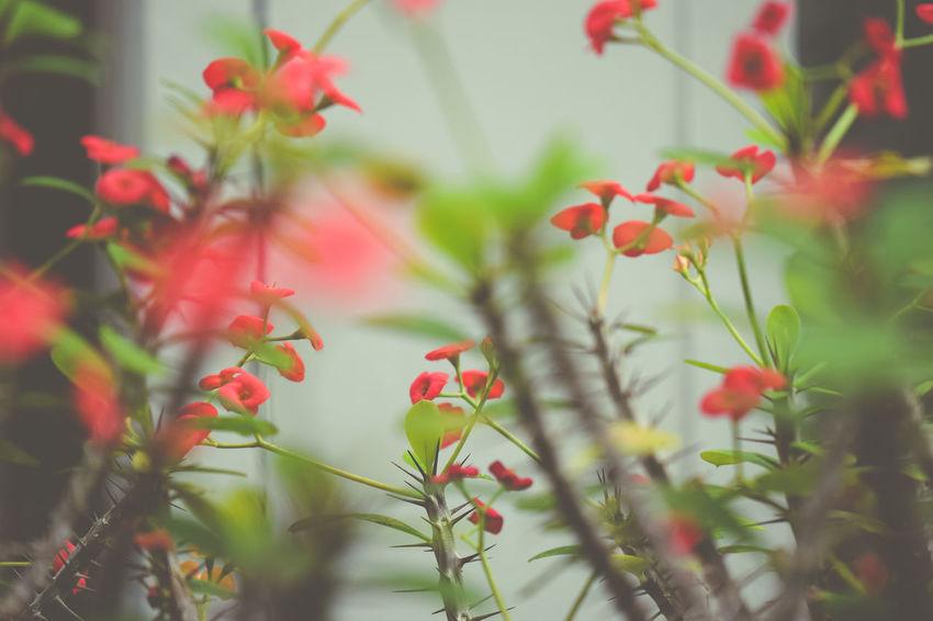 Close-up Flowers Macro Plants Tropical Plants