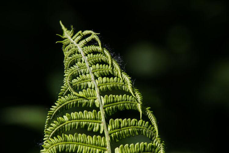 Close-up of fern tree