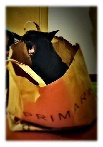Catoftheday BLackCat Shoppingbag