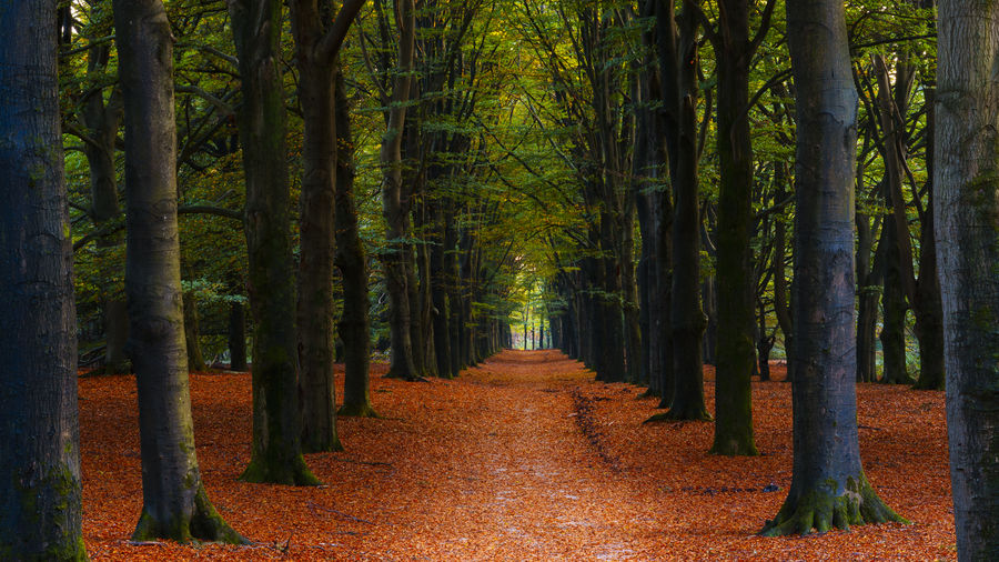 Autumn Tranquility Autumn Colors Green Netherlands Path Autumn Beauty In Nature Brown Day Forest Growth Landscape Nature No People Outdoors Scenics The Way Forward Tranquil Scene Tranquility Tree Tree Trunk Utrecht Walkway