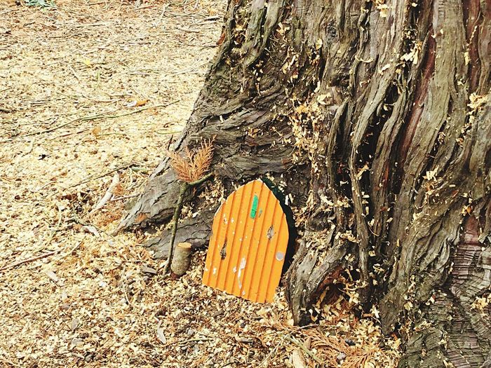 Fairy Door Ireland Cork City High Angle View Wood - Material Day No People Nature Outdoors Sunlight