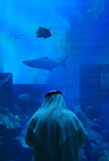 Into the blue Blue Underwater Urban Skyline Animal Themes Night Sea Life Nature Outdoors UnderSea Azul Agua Acuario Aquarium Agua Azul Peces Fish Sumerge On It Sumergido синий аквариум рыбы вода
