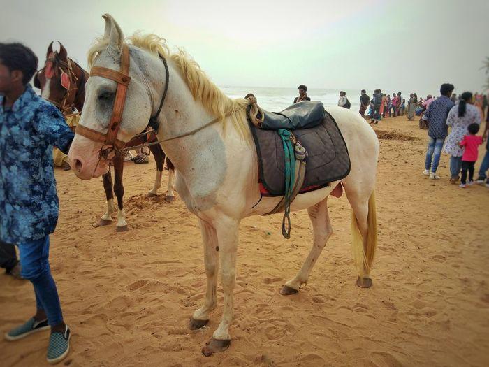 Men Togetherness Sand Child Beach Women Riding Sky Horseback Riding Horse Saddle Mane Bridle