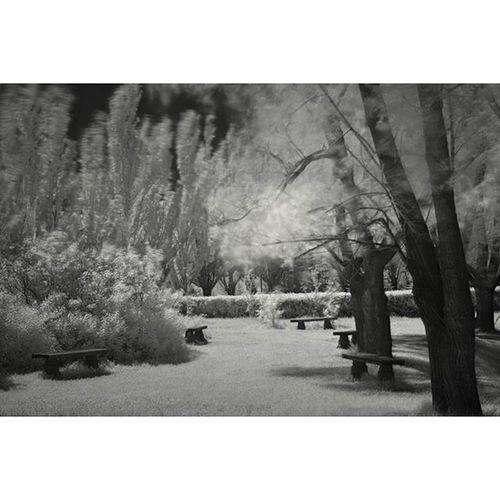 омск паркпобеды солнечныйдень инфракрасный пейзаж чернобелое поляна omsk inomsk sunnyday infrared landscape blackandwhite canon600d