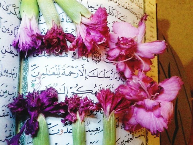 ﴾And We have not sent you (O Muhammad), except as a mercy to the worlds.﴿ Relaxing Smile EyeEm Best Shots No People Close-up Flower Eyem Gallery Eslam Eyem Best Shot - My World Muslim Libya Flowers EyeEm Best Shots - Flowers Butiful Nature Colorful Quran Qur'an Quran_kareem
