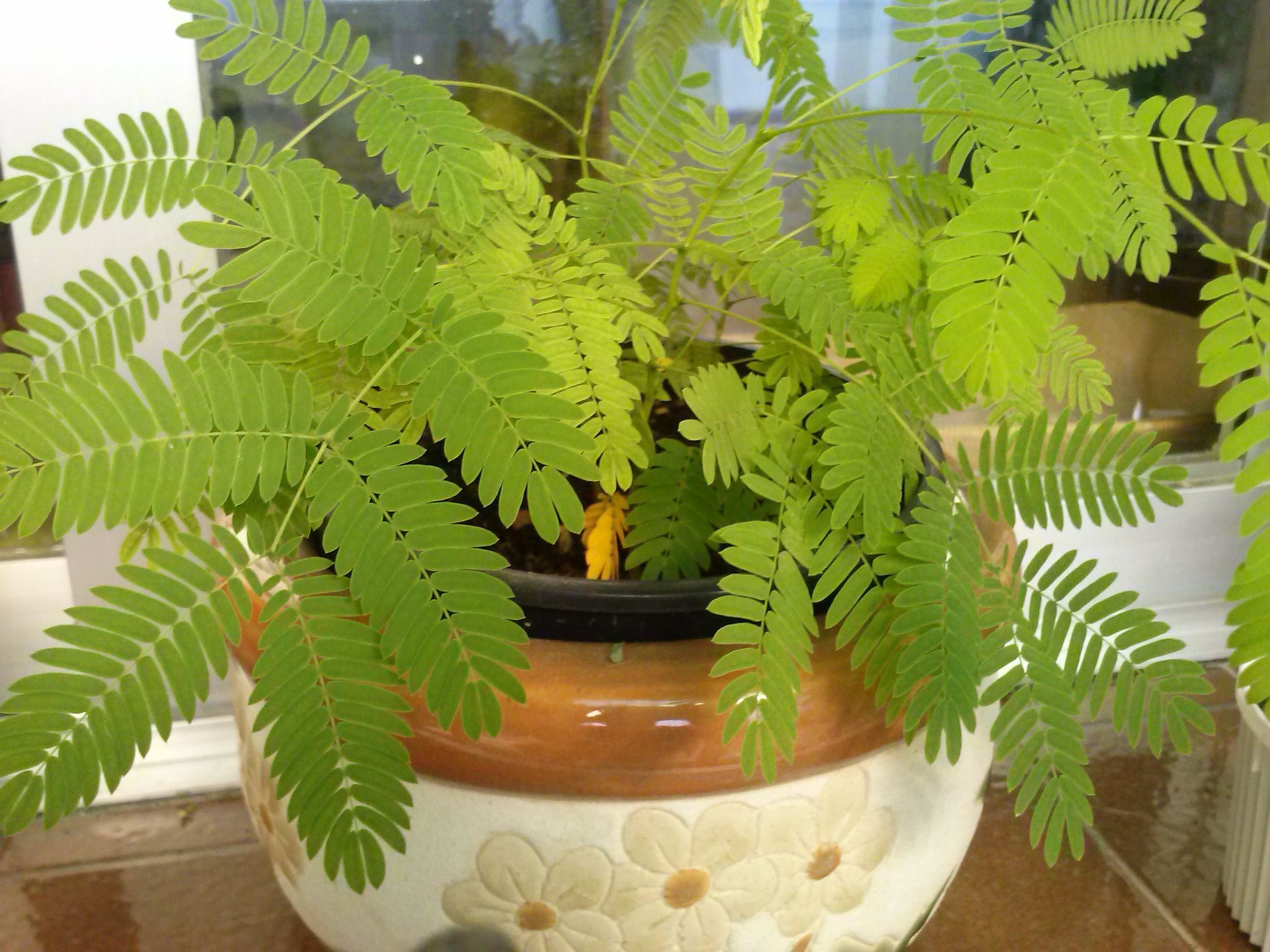 leaf, green color, growth, indoors, potted plant, plant, palm tree, tree, nature, low angle view, table, no people, close-up, day, sunlight, branch, built structure, freshness, beauty in nature, leaves