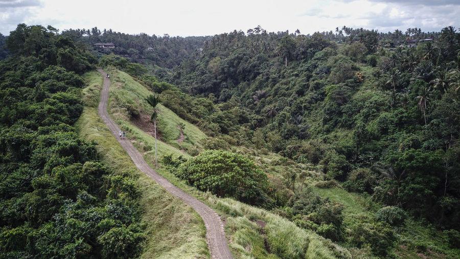 Bali INDONESIA Trees Jungle Landscape Walking Walkway Way