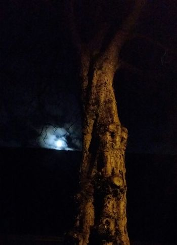 Night No People Tree Nature Outdoors Sky Galaxy Black And White Friday Black Background Nature Beauty In Nature Walking Around Herbststimmung Herbst Natures Jahreszeiten Baum Scary Moment Scary Tree Nachtspaziergang Moon Shots Moon Light Mond Wolkenhimmel Clouds