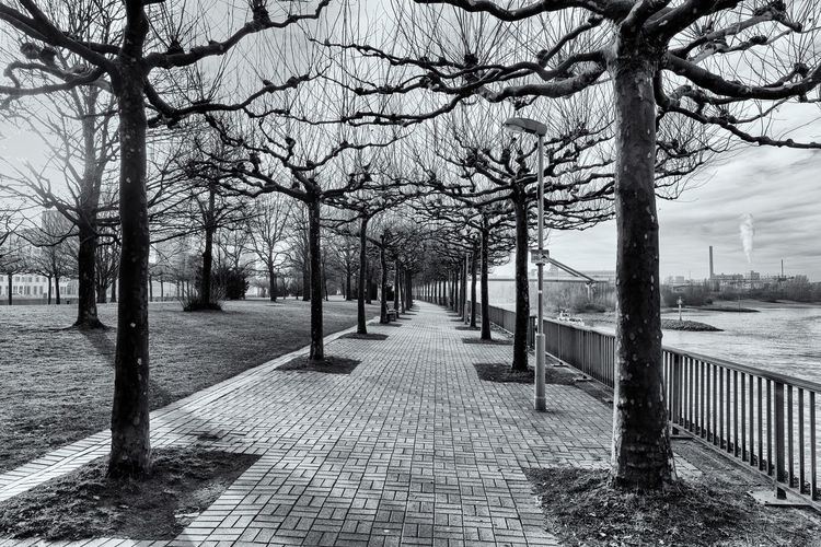 DUESSELDORF, GERMANY - JANUARY 20, 2017: There are many walkways in and around the new Media Harbor that invite visitors for exploring this exciting area. B&w Dramatic Lighting Tree Plant Bare Tree Architecture Nature The Way Forward Footpath Direction Trunk Tree Trunk Built Structure Day Park Branch Street City Outdoors No People Railing Treelined Diminishing Perspective