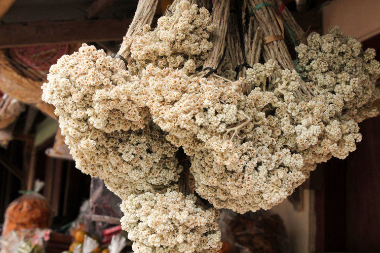 Close-up of fresh white flowers hanging in market