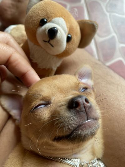 Close-up of dog with toy