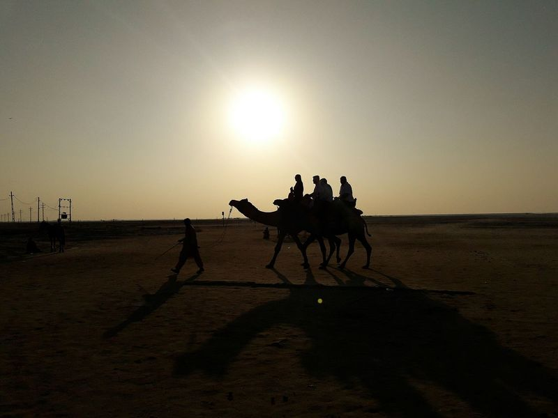 The moment when you surprise peo ple with your Photography Amazing View Afternoon Sun Desert Sand Domestic Animals Outdoors Sand Dune Mammal Camel Riding Real Photography Positioned Walking And Taking Pics 😍😌😊 Shadow And Light Android Camera Earning For Living My Click ;) Looking Around Perfect Scene Clicked From Phone Click_n_share Photography In Motion Arid Landscape The Week On EyeEm