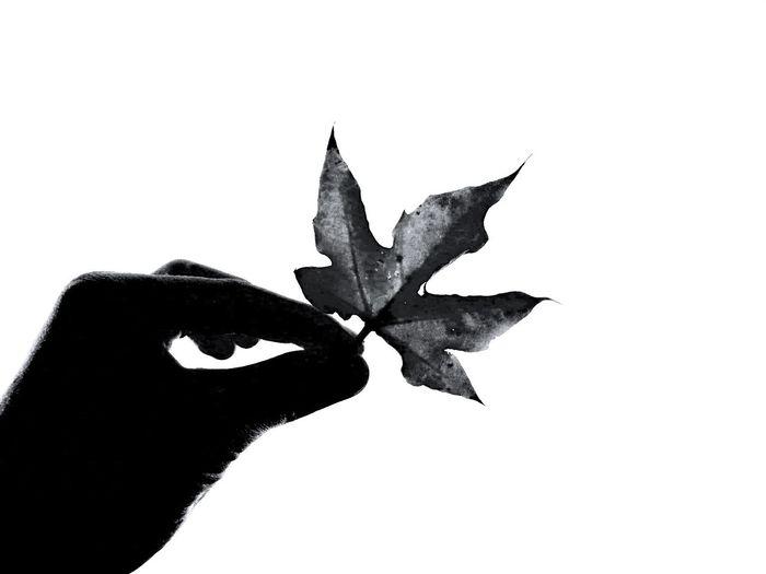Autumn Blackandwhite Minimalism Mininalist First Eyeem Photo