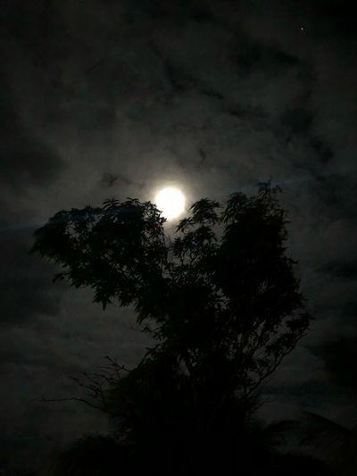 Tree Sky Night