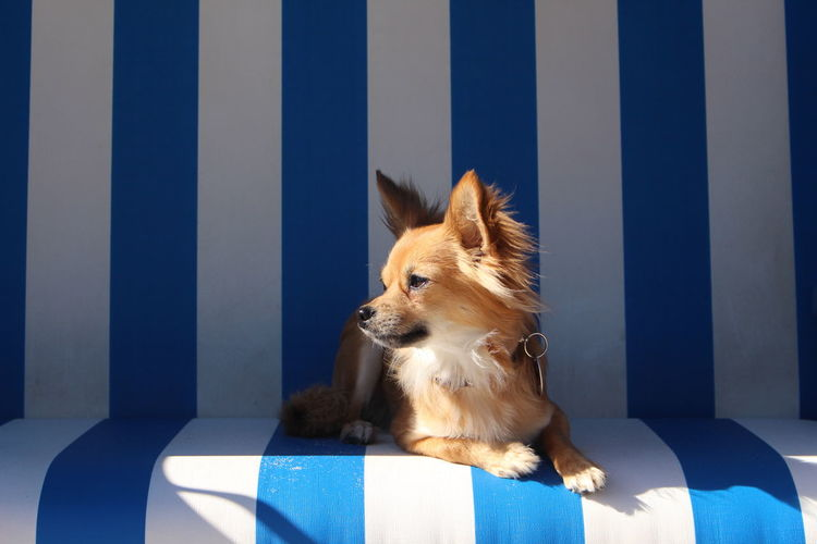 Light Strand Strand ♥ Strandkorb Animal Themes Beach Beachphotography Chihuahua Chihuahualovers Day Dog Domestic Animals Light And Shadow No People One Animal Pets Photography Be. Ready.