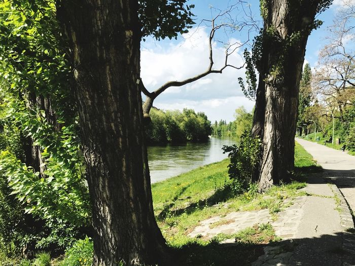 Spaziergang am Donaukanal Fotografheryerde Knycl Photographer Photography Photo Canon EOS M5 Canon_photos Canonphotography Canon Vienna Donaukanal Tree Tree Trunk Nature Tranquility Day Tranquil Scene Outdoors Beauty In Nature Water Green Color Forest Grass Sky