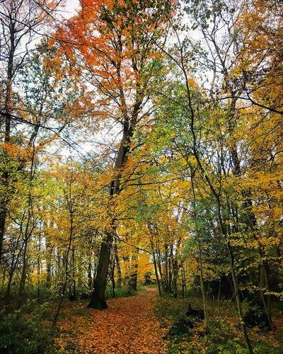 Autumnbeauty