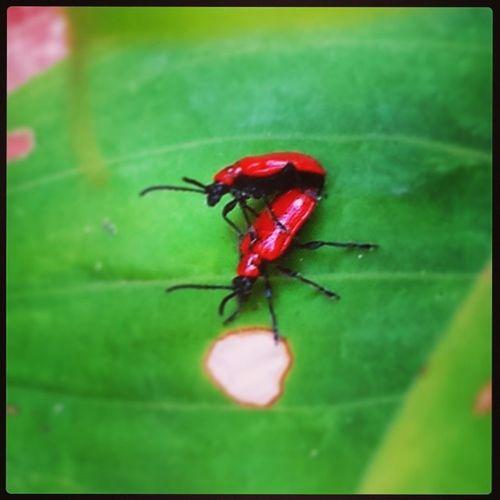 Abugslife Doinitliketheydoonthediscoverychannel Bugporn Whyamiwatching