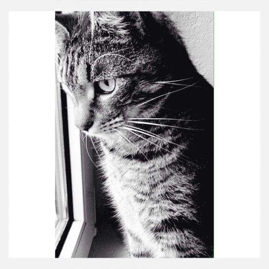 Sweet Cat♡ Nice MyDarling  Love Pets