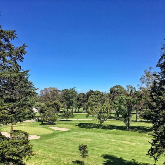 Tree Blue Green Color Grass Growth Nature Clear Sky Tranquil Scene Beauty In Nature Tranquility Scenics Outdoors Landscape No People Day Sky Green - Golf Course Golf Golf Course
