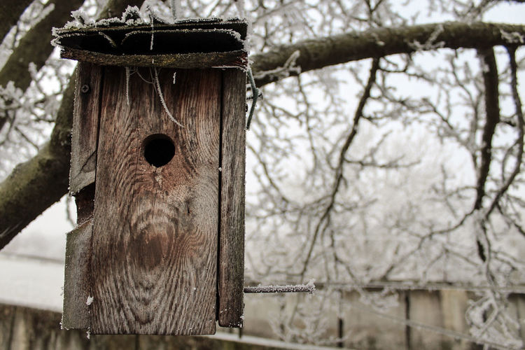 Bird house... Focus On Foreground Tree No People Hanging Birdhouse Animal Themes Outdoors Nature Beauty In Nature Day Landscape Winter Wonderland Wintertime Fulda Germany Hessen Canon Canonphotography Canon EOS 1300D Lightroom Silence Cold Temperature Winter