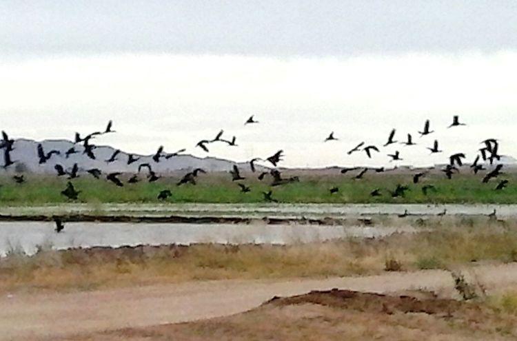 Flock Of Birds Taking Photos Free Open Edit Casagrande Birds