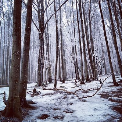 Mountains Bieszczady Trip Poland backpack trees forest snow winter