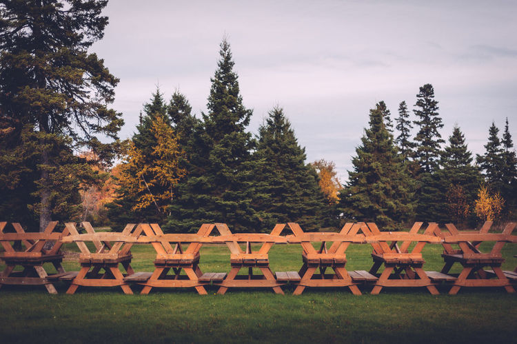 Forest Grass Outdoors Park Picnic Tables Row Togetherness Tree Trees