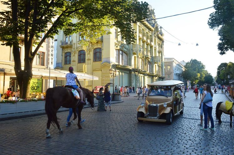 City City Life Domestic Animals Horse Mode Of Transport Riding Street Working Animals