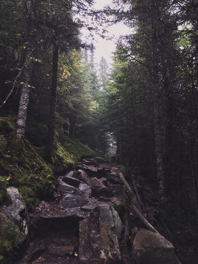 Canada Quebec Hike Gaspesie
