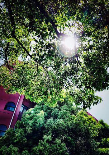 Sky Sunny Shanghai