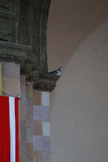 Architecture Bird Photography Built Structure Church Architecture Column Indoors  Pegeon Religious Architecture