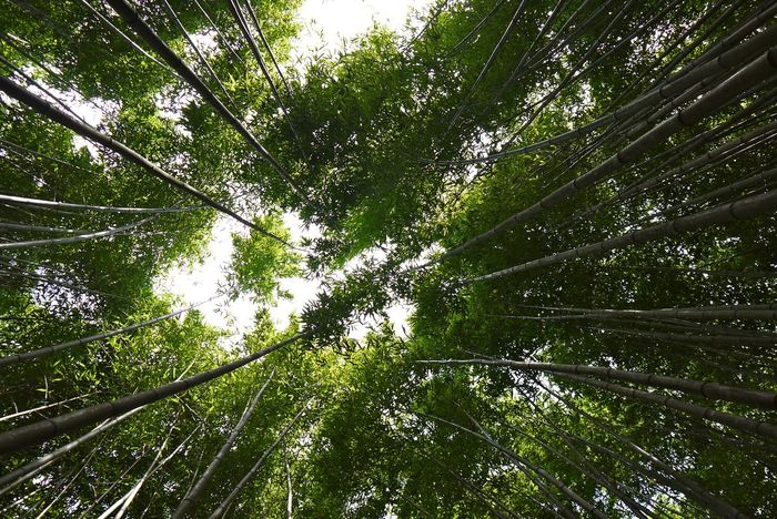 The Great Outdoors - 2017 EyeEm Awards Forest Bamboo Grove Nature