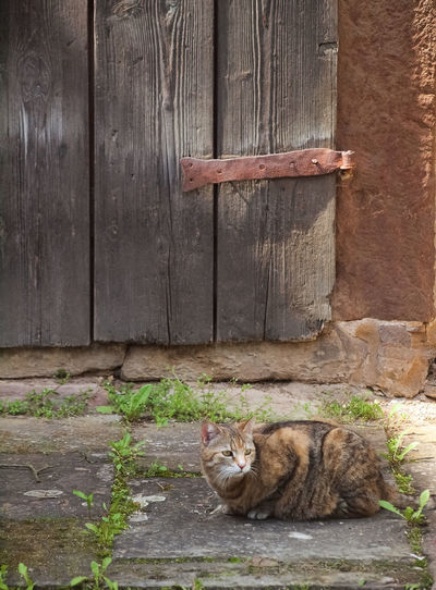 Pets Cat Domestic Domestic Animals Mammal Domestic Cat Feline Animal Themes Animal One Animal Vertebrate Wood - Material Relaxation No People Day Resting Architecture Built Structure Entrance Door Whisker