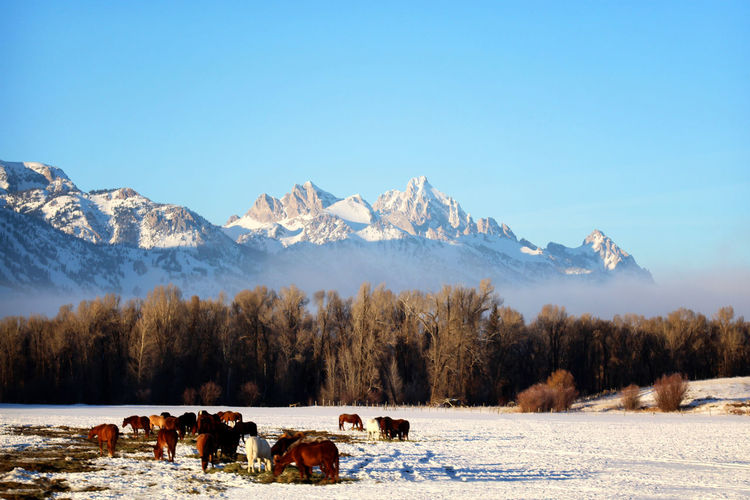 View of horses on snow covered landscape