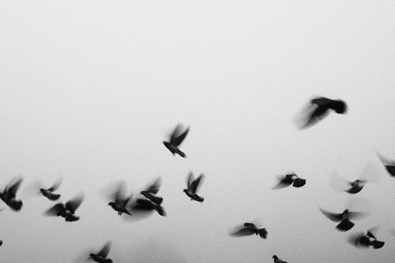 Birds Fog